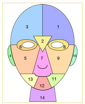 the face divided into individual zones
